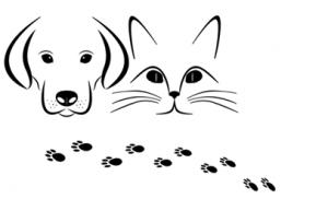 dog gps tracker| dogsfuns.com