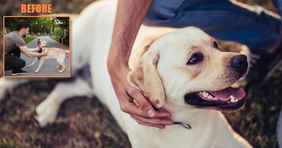 Anti Bark Dog Training