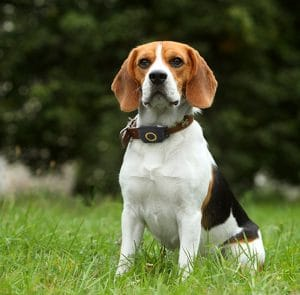 what is the best gps tracker for my dog?