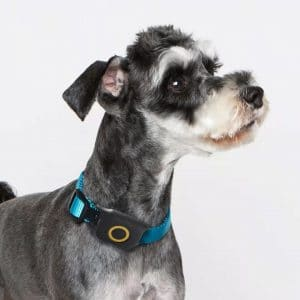 What is the Dogsfans Dog GPS Tracker?