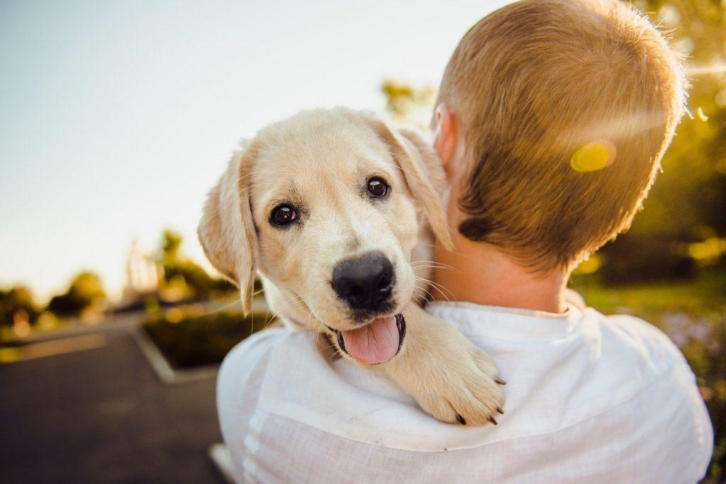 adorable, animal, dog-3344414.jpg