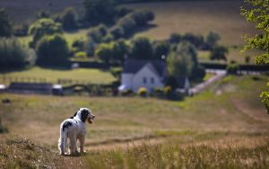 How much is a GPS tracker for a dog?