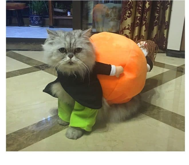 dog and owner costumes