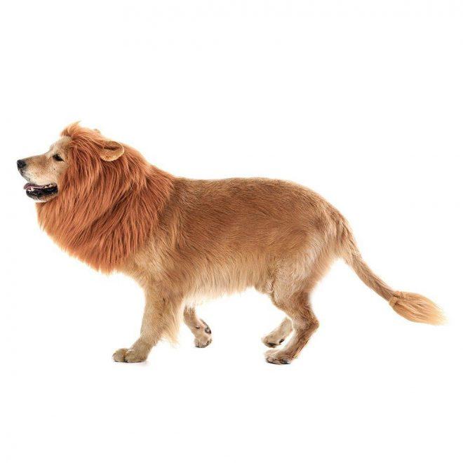 dog lion costume